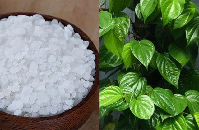 Lá trầu không kết hợp với muối để khắc phục viêm âm đạo